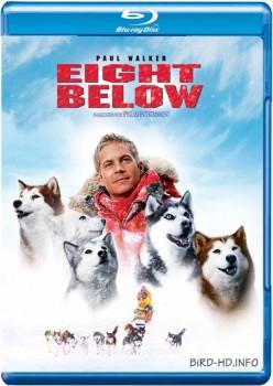 Eight Below 2006 m720p BluRay x264-BiRD