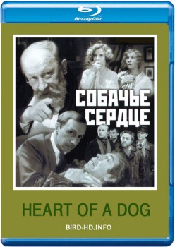 Heart of a Dog 1988 m720p BluRay x264-BiRD