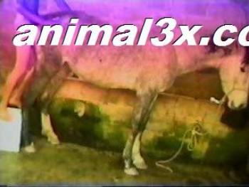 10d585331122984 egua