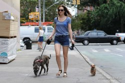 Leighton Meester Walking Her Dogs in New York City - 7/28/14