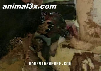 6d1be3351231088 xxx Zooskool   Sharas Dog 1femme seprend 1 main entiere ds