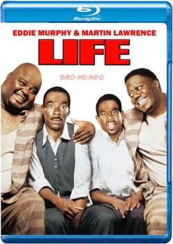 Life 1999 m720p BluRay x264-BiRD